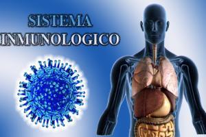Sistema inmunol gico alimentos para curar pag 1 - Alimentos sistema inmunologico ...
