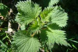 que medicina natural se puede tomar para el acido urico cosa provoca l'acido urico alto acido urico ph