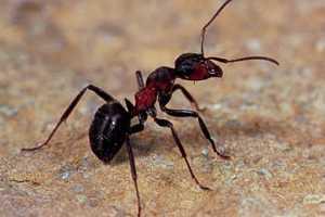 Remedios naturales contra las picaduras de insectos