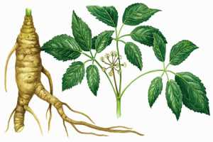 Plantas medicinales propiedades del Ginseng